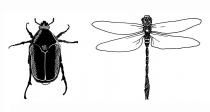 escarabajo y libelula